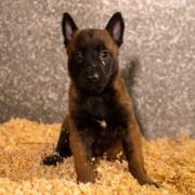 cachorros-niky5