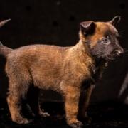 cachorros-niky9