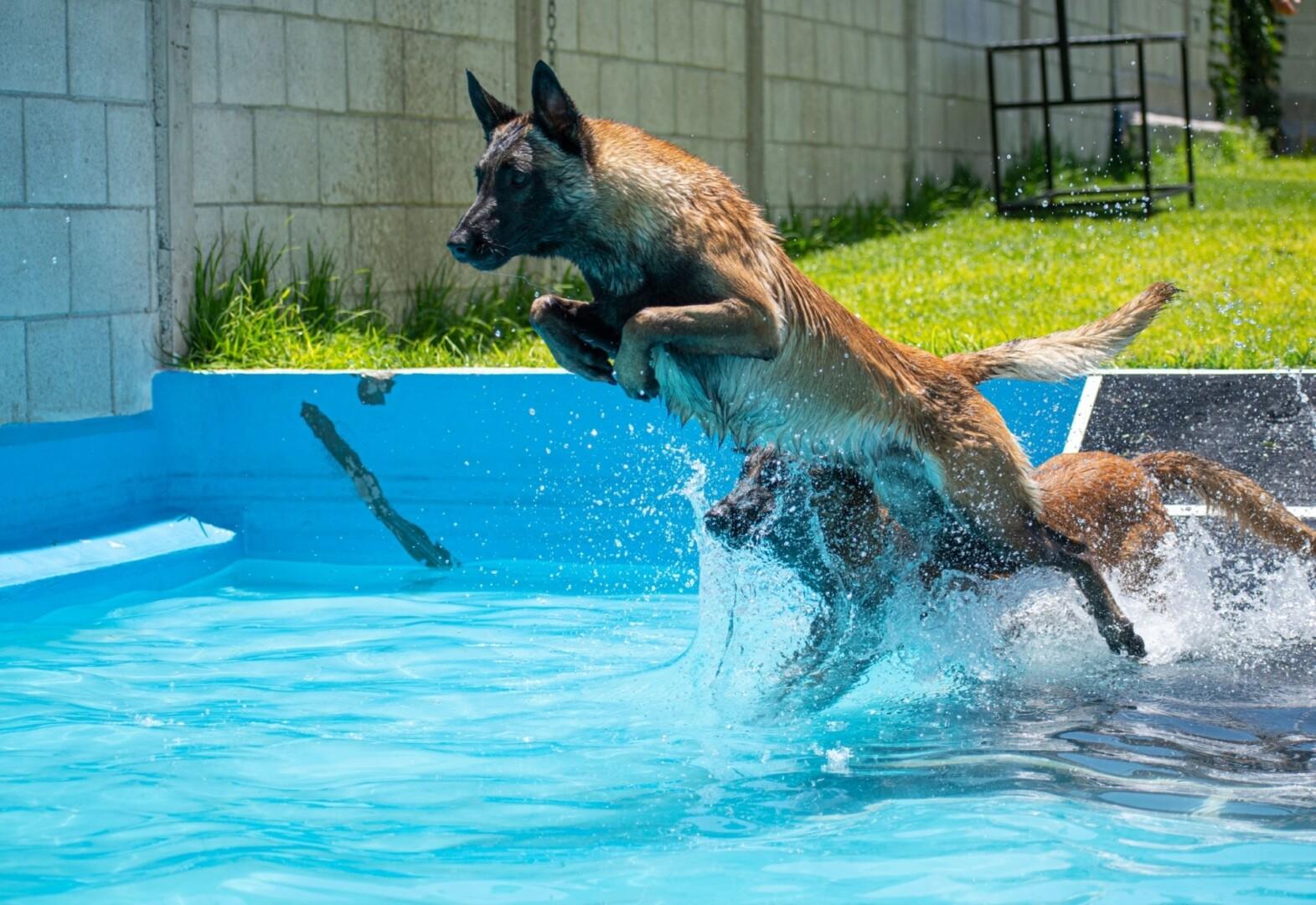 natacion-canina-perros-elite-mexico1
