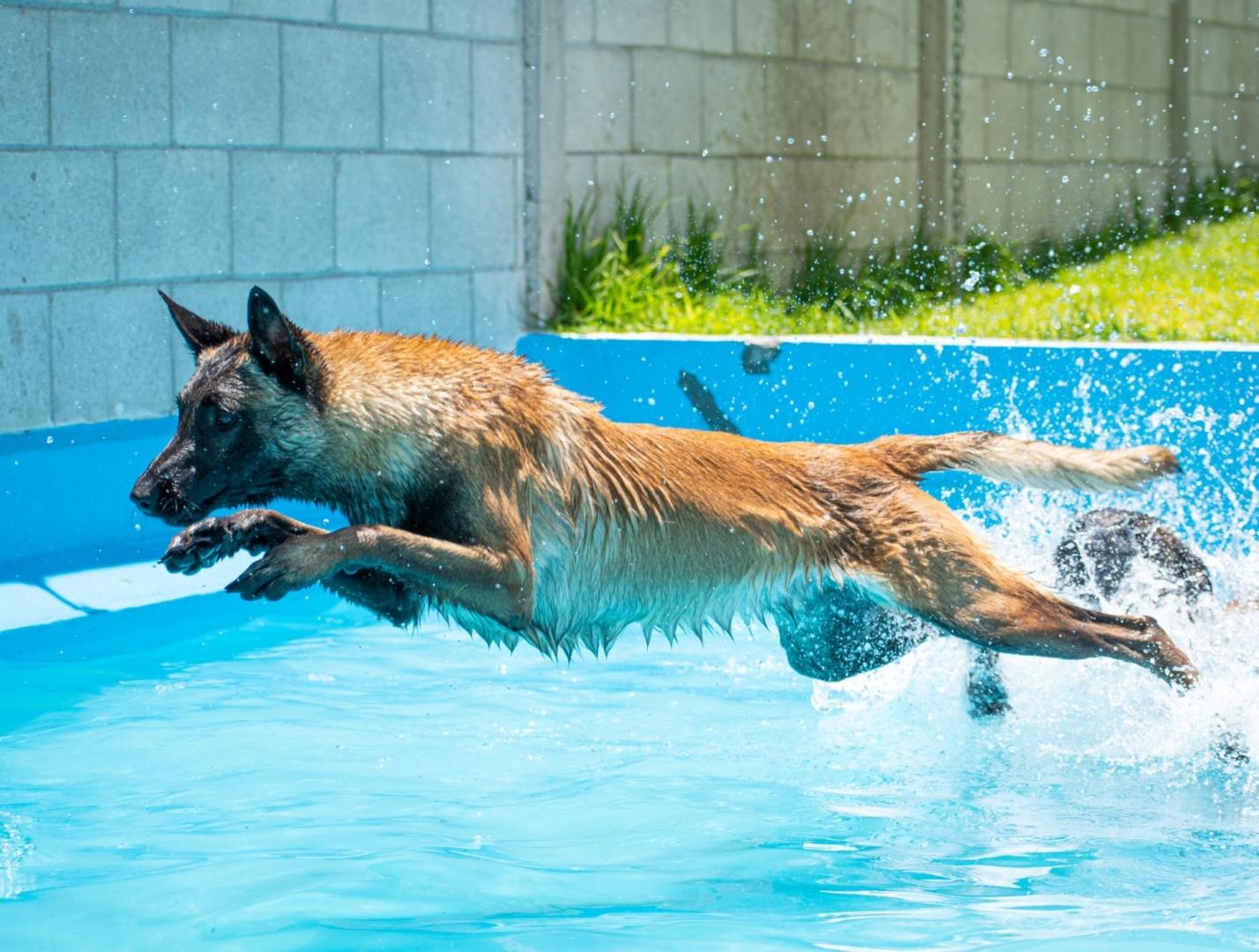 natacion-canina-perros-elite